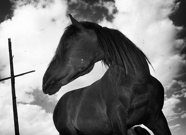 мой маленький пони, фото пони, карпатские горы-16