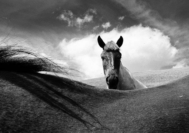 мой маленький пони, фото пони, карпатские горы-2