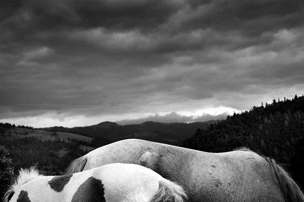 мой маленький пони, фото пони, карпатские горы-3