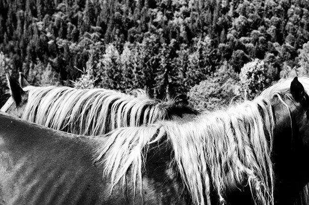 мой маленький пони, фото пони, карпатские горы-4