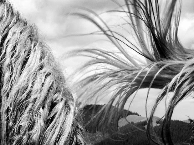 мой маленький пони, фото пони, карпатские горы-5