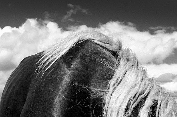 мой маленький пони, фото пони, карпатские горы-6