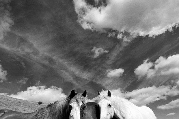 мой маленький пони, фото пони, карпатские горы-7