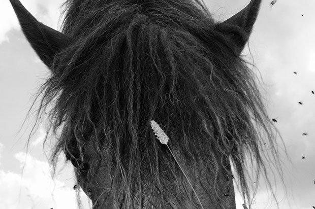 мой маленький пони, фото пони, карпатские горы-8