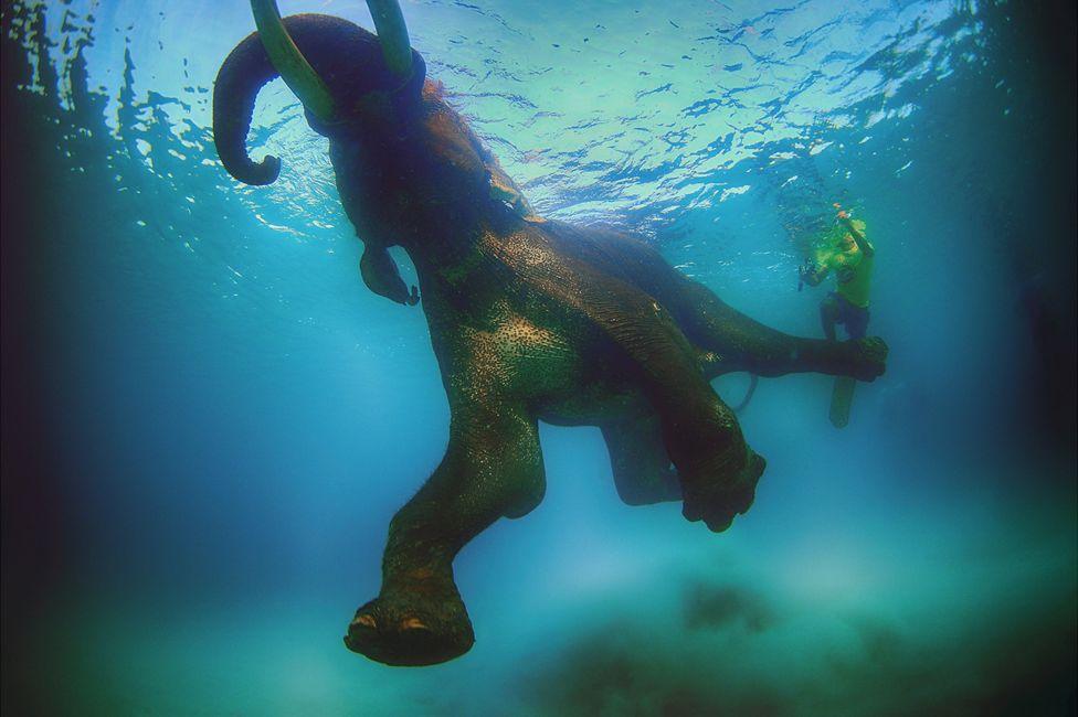 подводный фотоаппарат, фотоаппарат для подводной съемки, съемка под водой-1