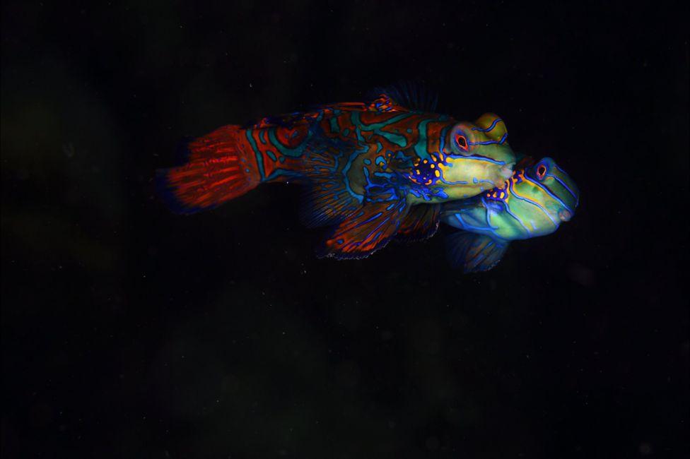 подводный фотоаппарат, фотоаппарат для подводной съемки, съемка под водой-10