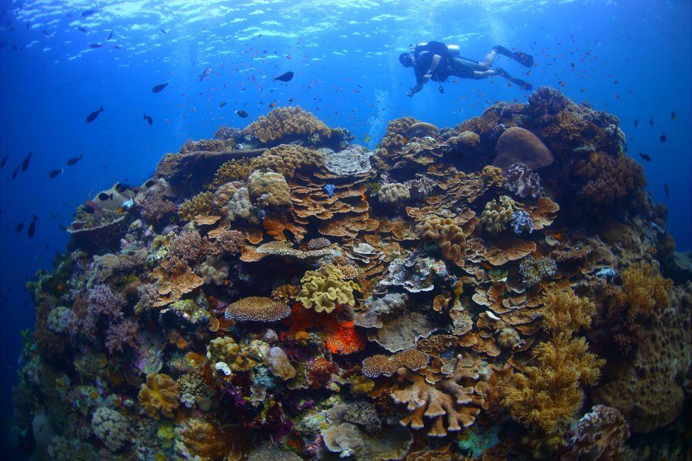подводный фотоаппарат, фотоаппарат для подводной съемки, съемка под водой-11