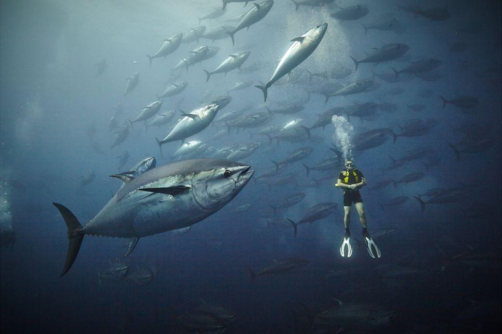 подводный фотоаппарат, фотоаппарат для подводной съемки, съемка под водой-12