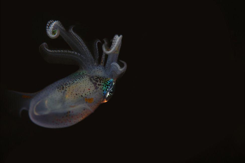 подводный фотоаппарат, фотоаппарат для подводной съемки, съемка под водой-14