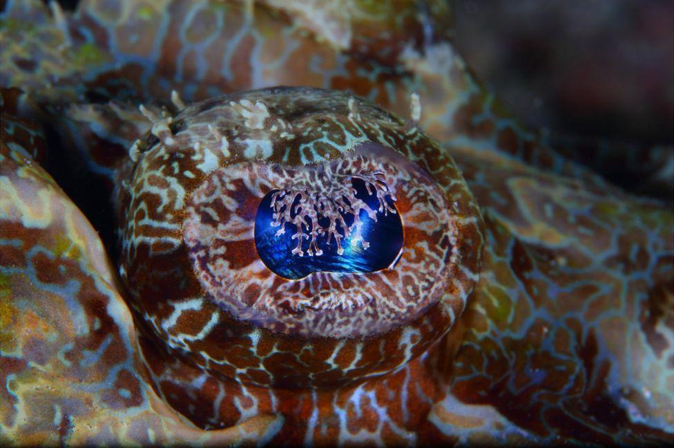 подводный фотоаппарат, фотоаппарат для подводной съемки, съемка под водой-16