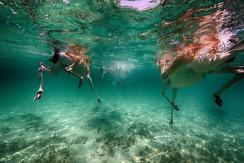 подводный фотоаппарат, фотоаппарат для подводной съемки, съемка под водой-2