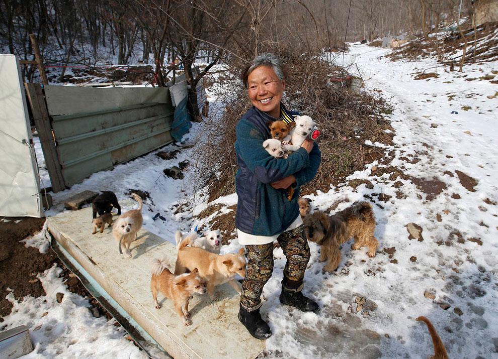 собачий приют, спасение собак, взять щенка из приюта , фото № 1