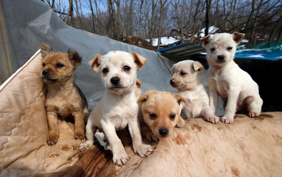 собачий приют, спасение собак, взять щенка из приюта , фото № 2