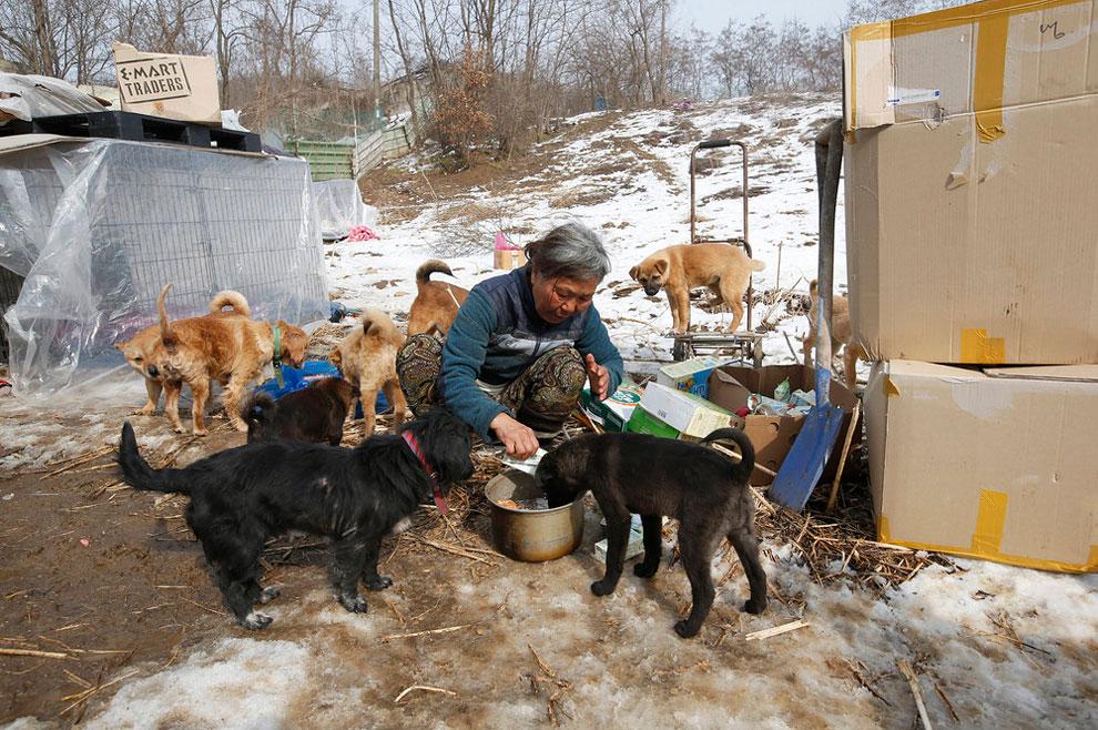 собачий приют, спасение собак, взять щенка из приюта , фото № 3