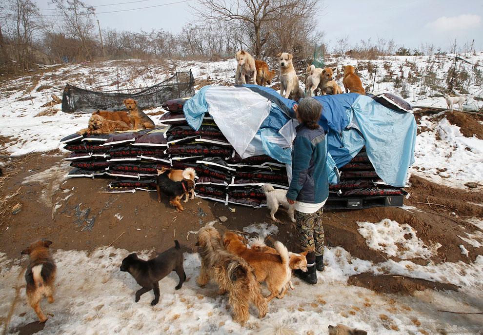 собачий приют, спасение собак, взять щенка из приюта , фото № 5