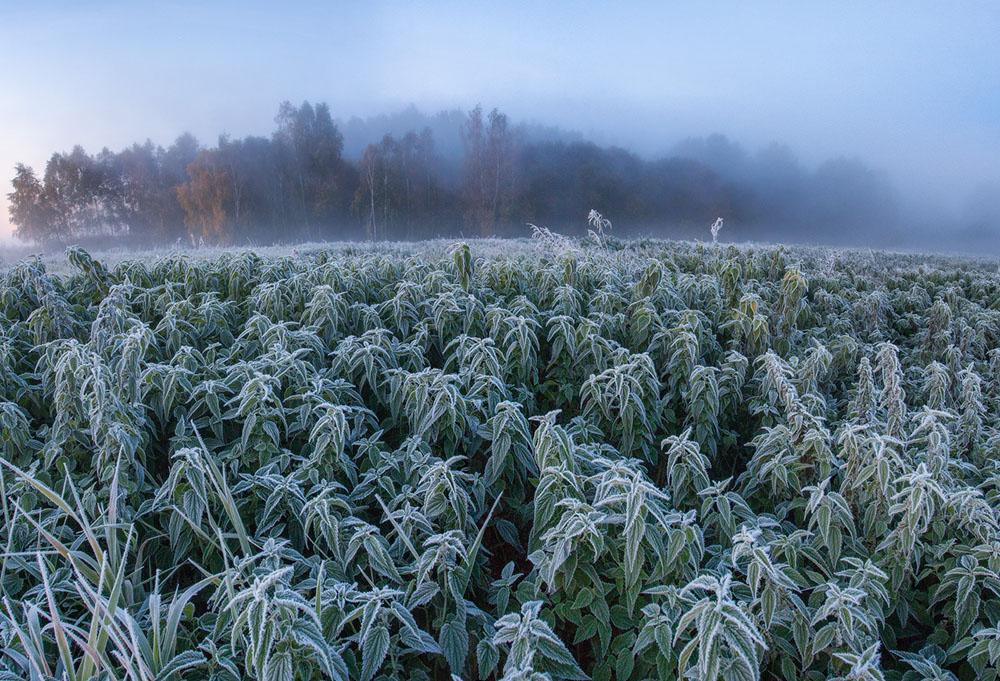 зимняя природа фото, иней фото, природа Беларуси-7