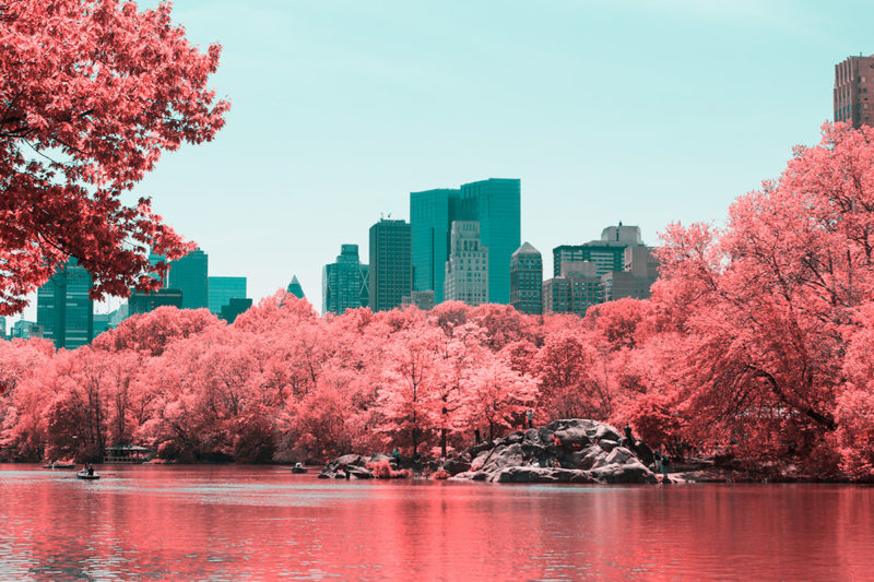 Infrared Photos Of New York's Central Park