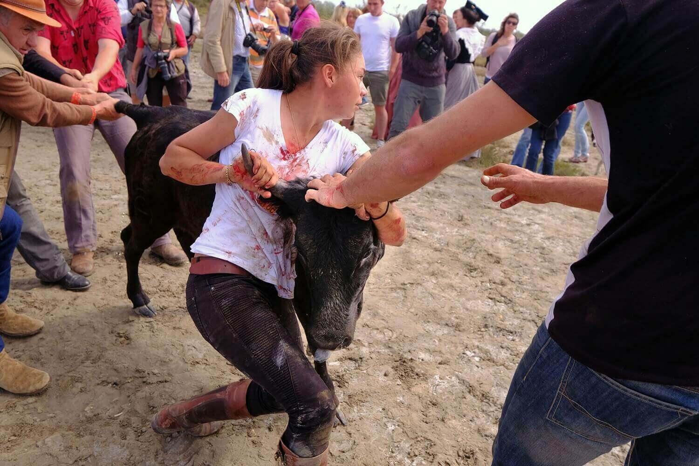 Мари Сегреттер помогает усмирять молодых бычков