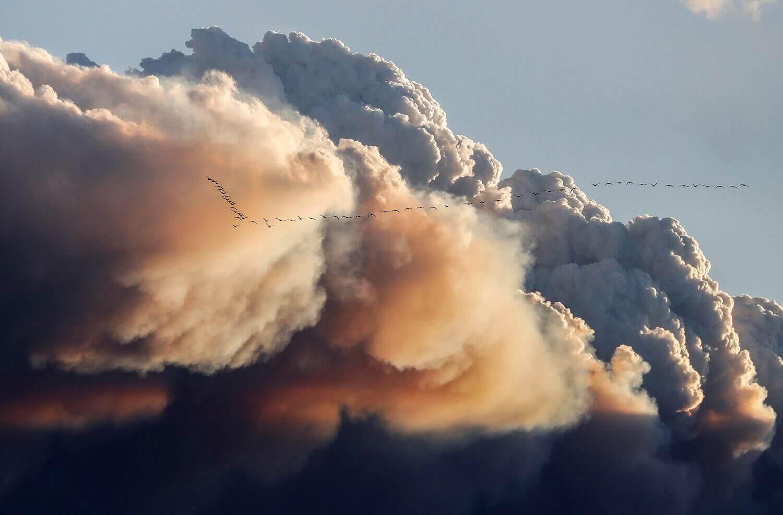 Стая птиц улетает от дыма, вызванного лесными пожарами.