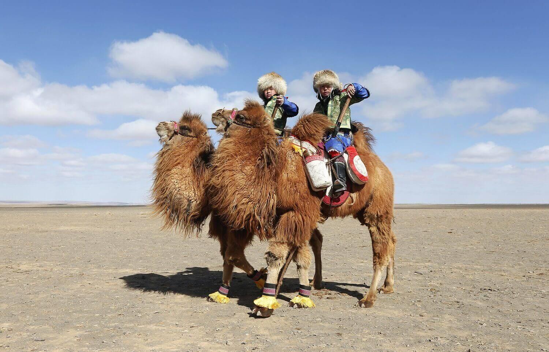 Дети катаются на верблюдах, фестиваль верблюдов, в городе Даланзадгад.