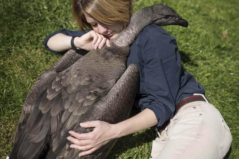Холли Кейл, проводит время с Моккасом, годовалым андским кондором