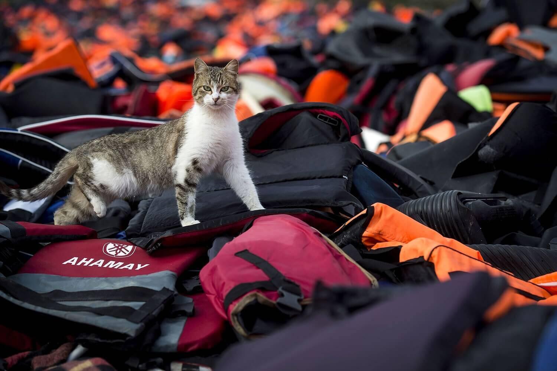 Бездомная кошка гуляет по использованным спасательным жилетам.