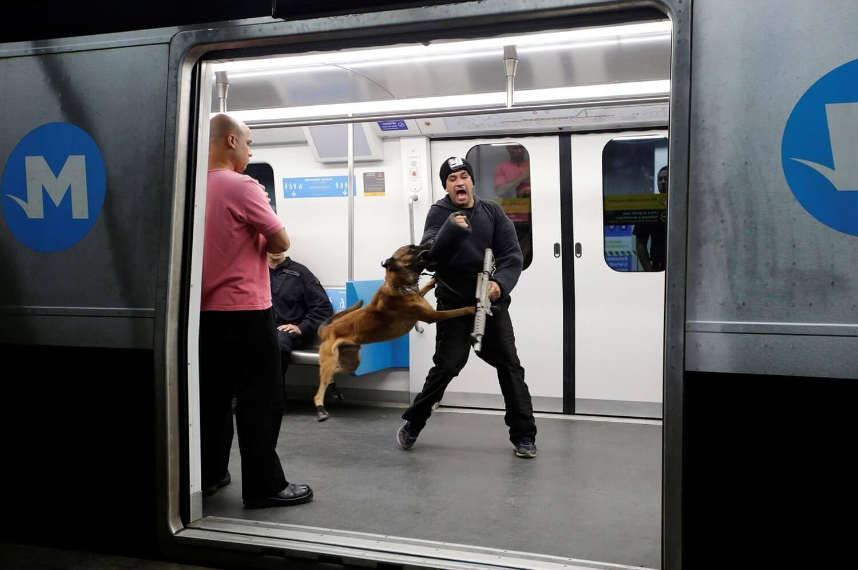 Потенциальный террорист атакован полицейской собакой из специального подразделения военной полиции Бразилии .