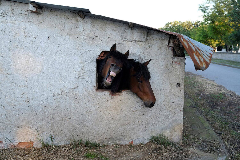 Лошади выглядывают из окошка своей конюшни.