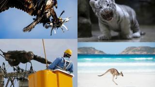 Животные в новостях - животный мир