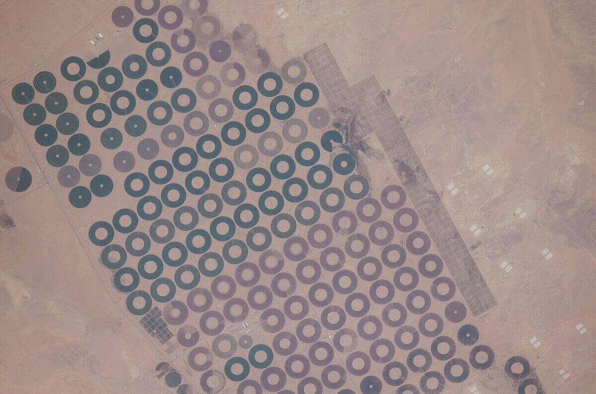 Локализованная ирригация в центральных областях государства Саудовская Аравия.