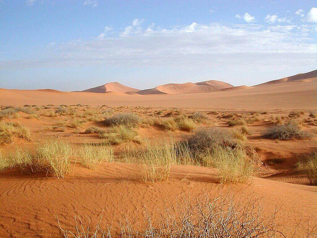 пустыня Сахара, Растительности