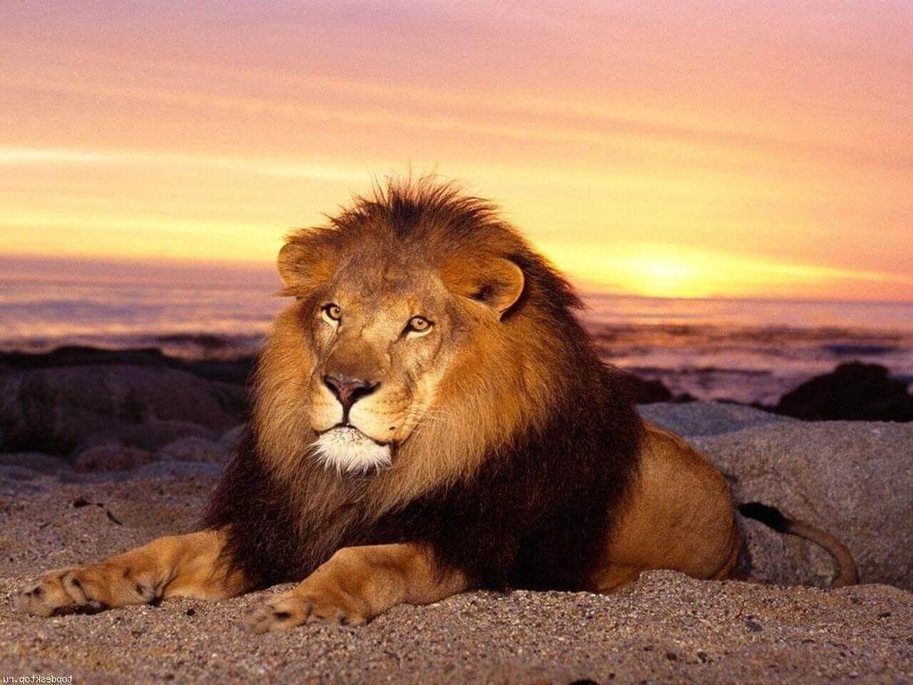 ТОП 10 опасных животных на Земле