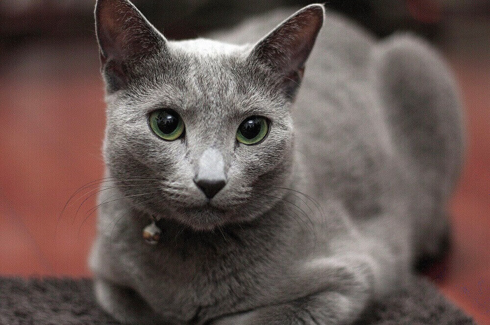 Интересные и занимательные факты о котах и кошках.