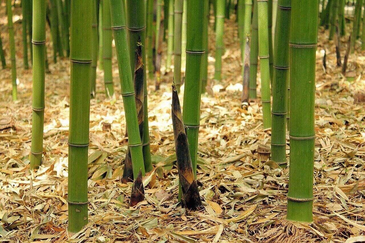 Бамбуковая казнь