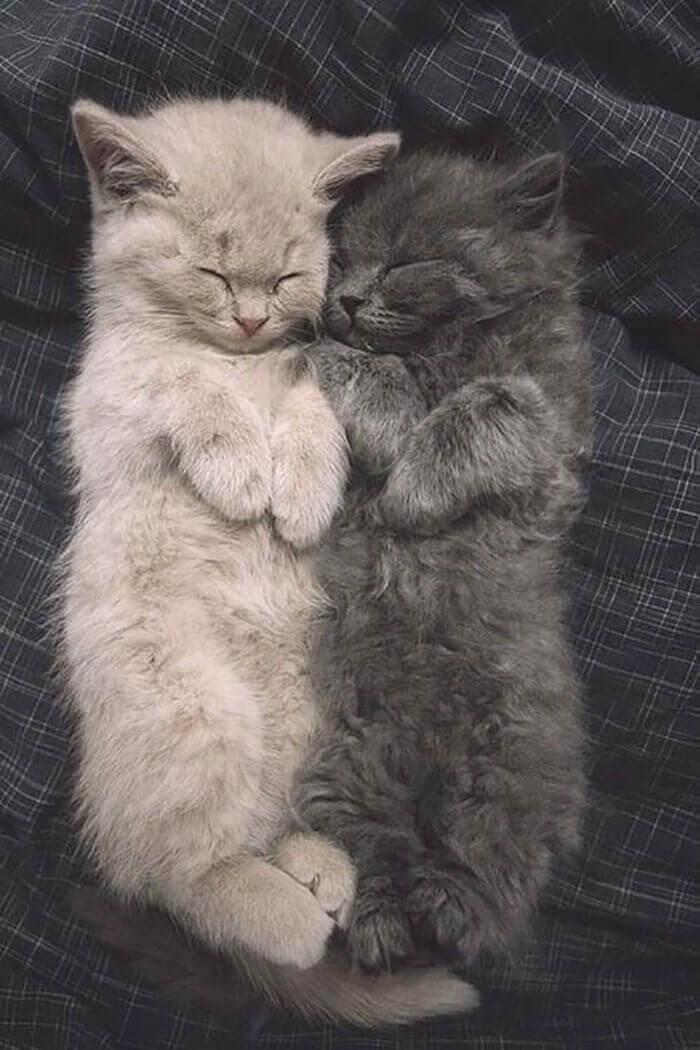 Кошки любят вздремнуть