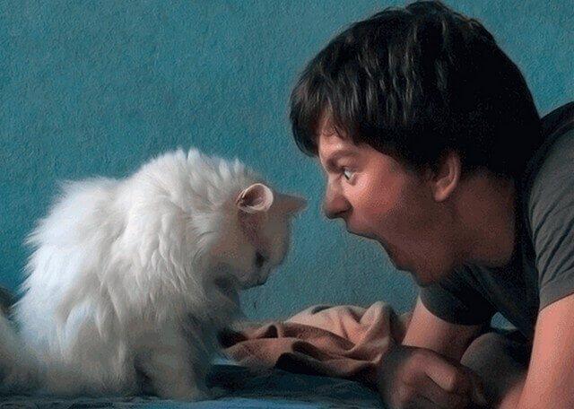 Кошки различают интонации в человеческой речи