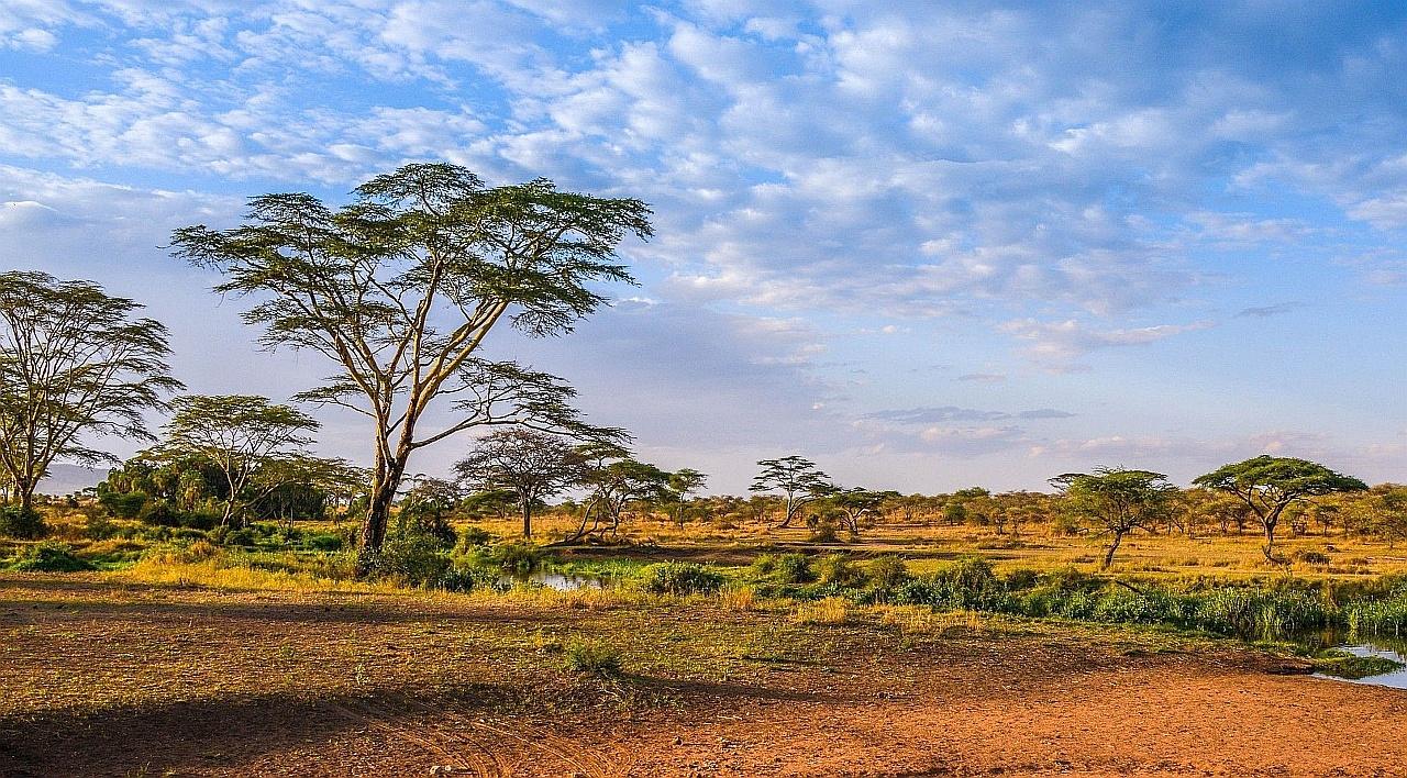 Саванна африки