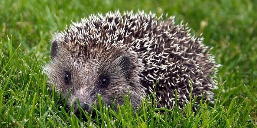 факты про животных лесных зон