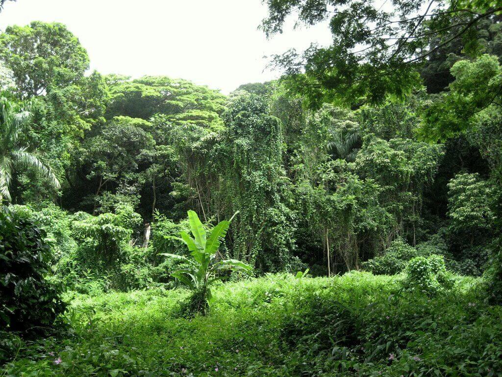 Джунгли Африканского континента.