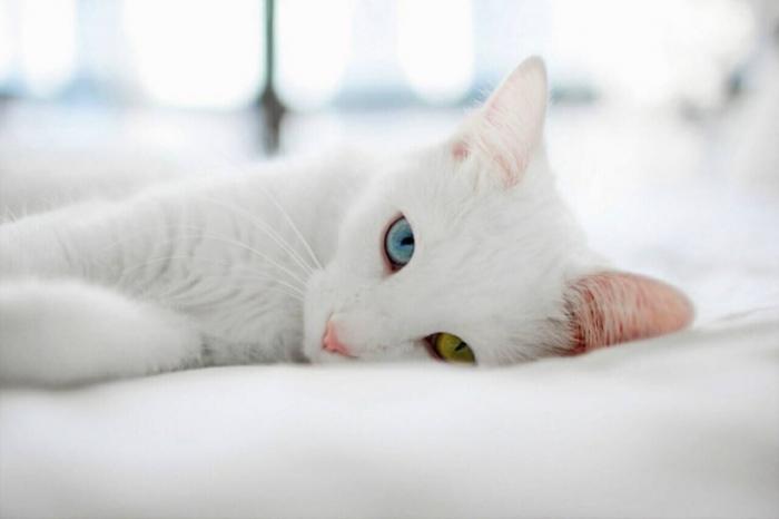 ТОП-5 самых редких и дорогих домашних кошек в мире.