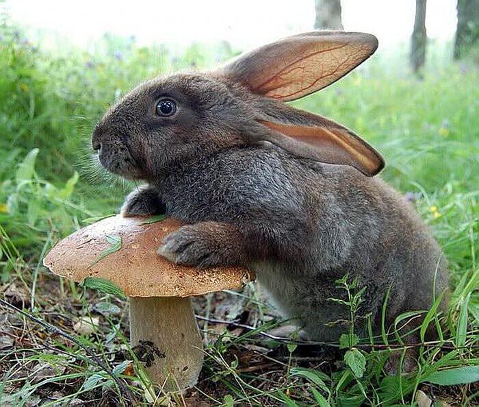 интересные факты о зайцах для детей