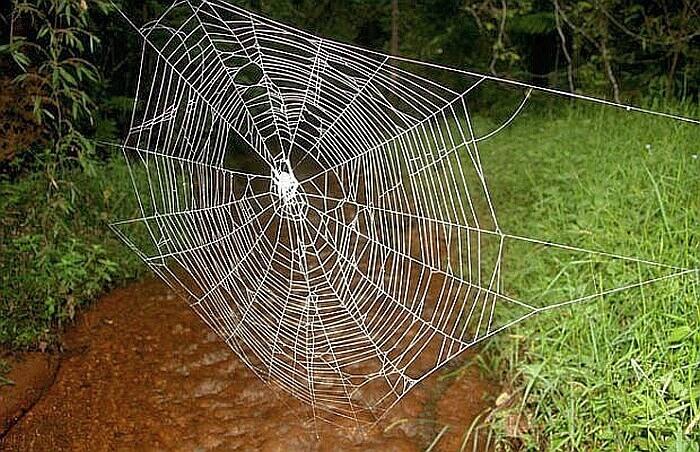 Самая прочная паутина