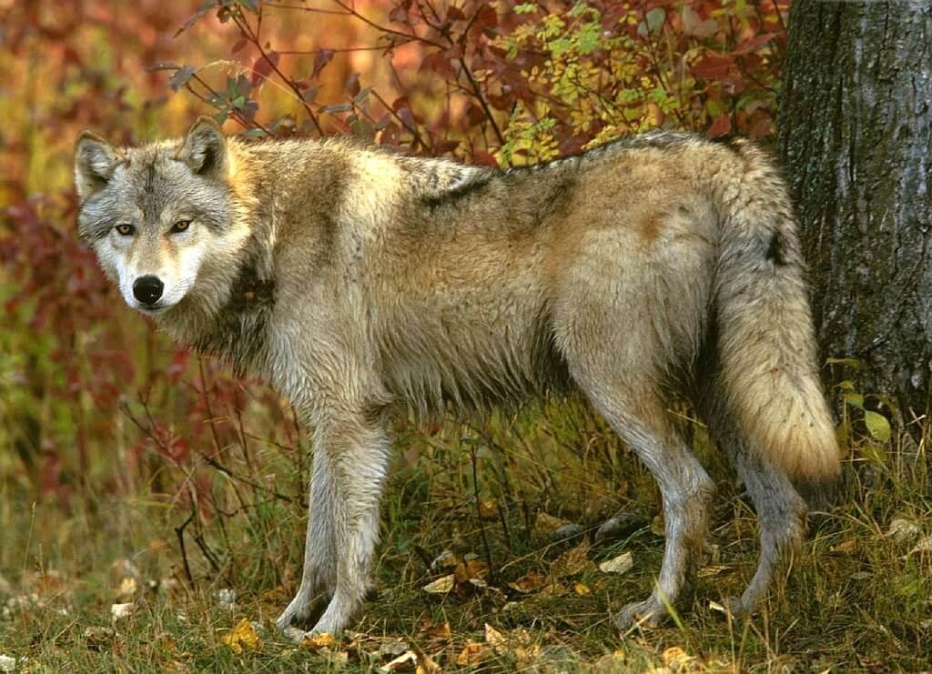 Интересные факты про лесных зверей