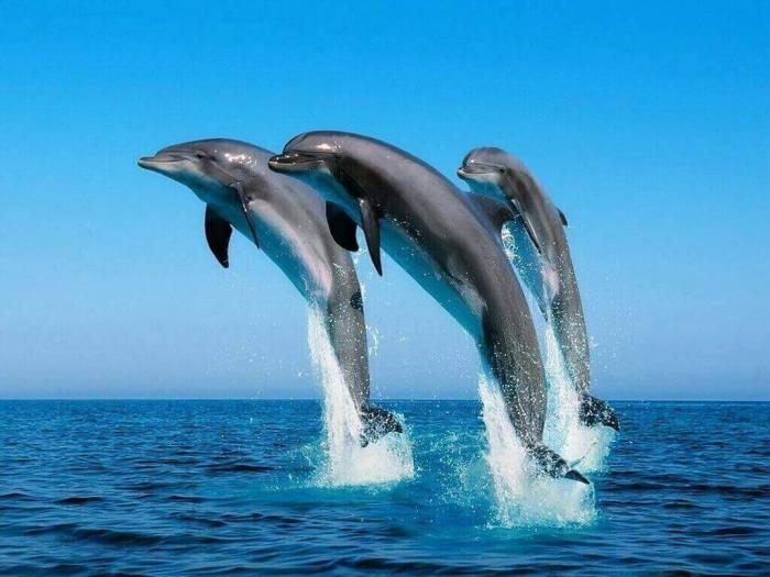 Эти умные и веселые существа — дельфины