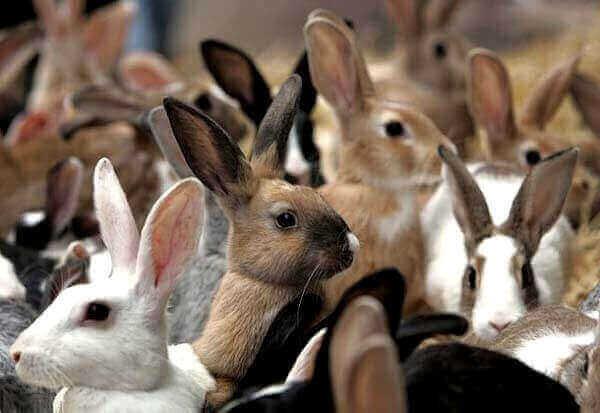 кролики живут группами