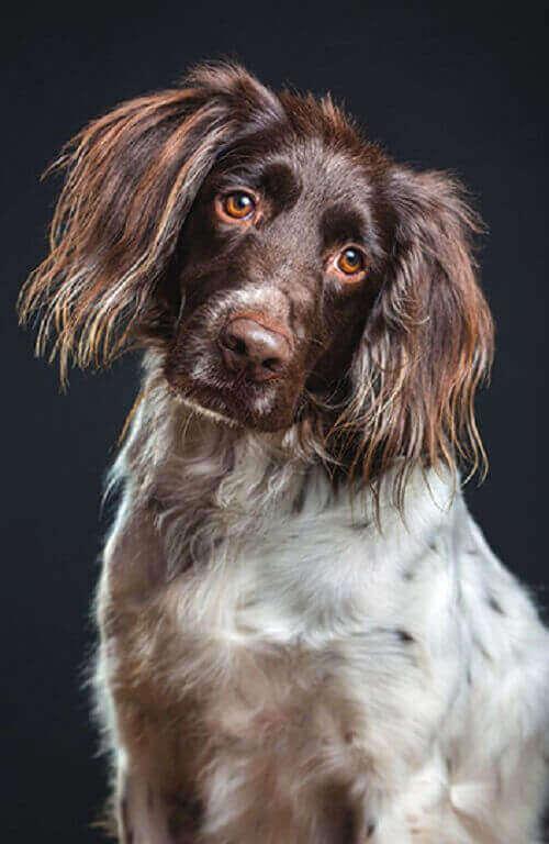 Фотопортреты собак от Элке Вогельсанг
