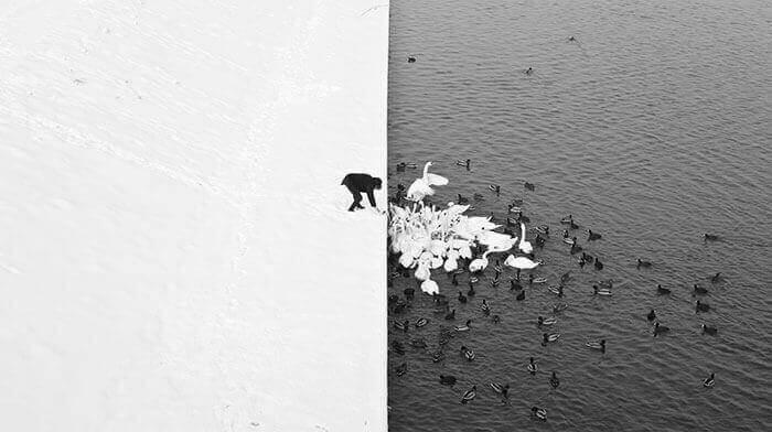 Мужчина на снегу, кормящий лебедей