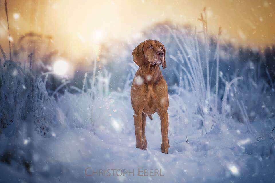 фото собак от Christoph Eberl