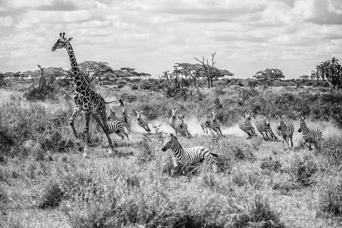 Побег животных, жизни дикой фауны