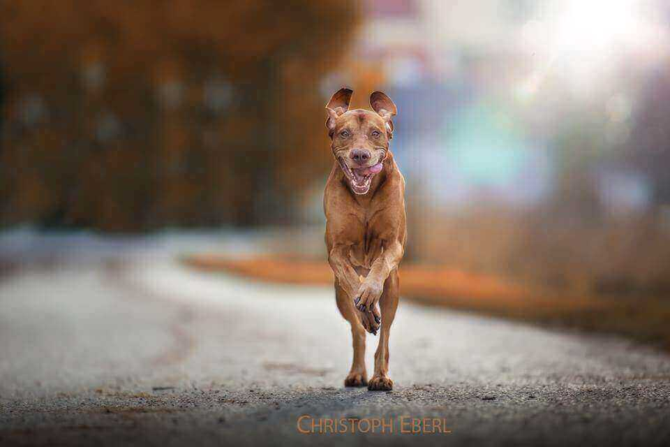 красивые фото собак